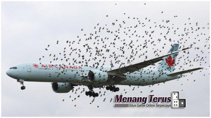 Alasan Burung Berterbangan